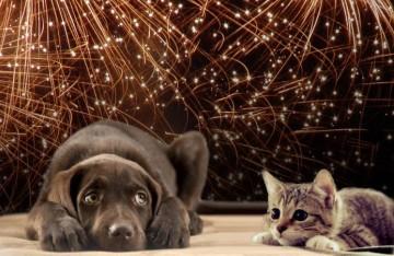 Vuurwerkangst honden en katten