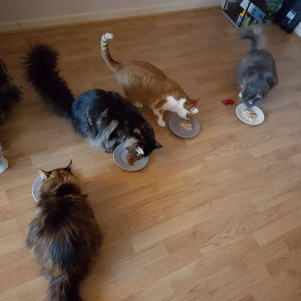 4 katten