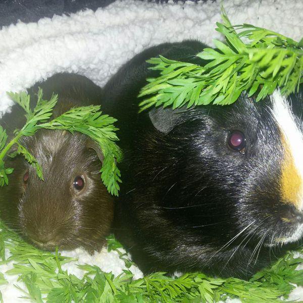Hugo en Harry