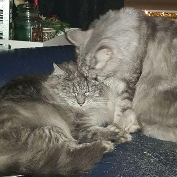 Tommy en Rocco