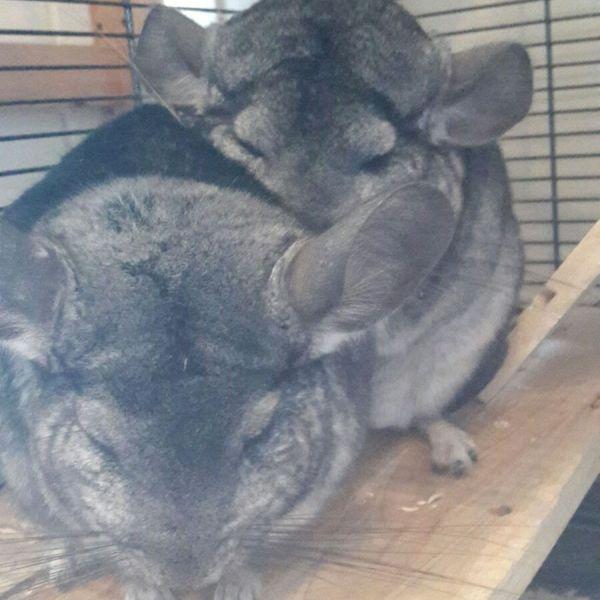 Bunny en Muis