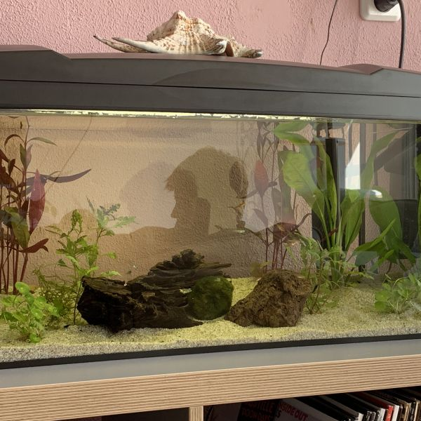 Vissen en garnalen