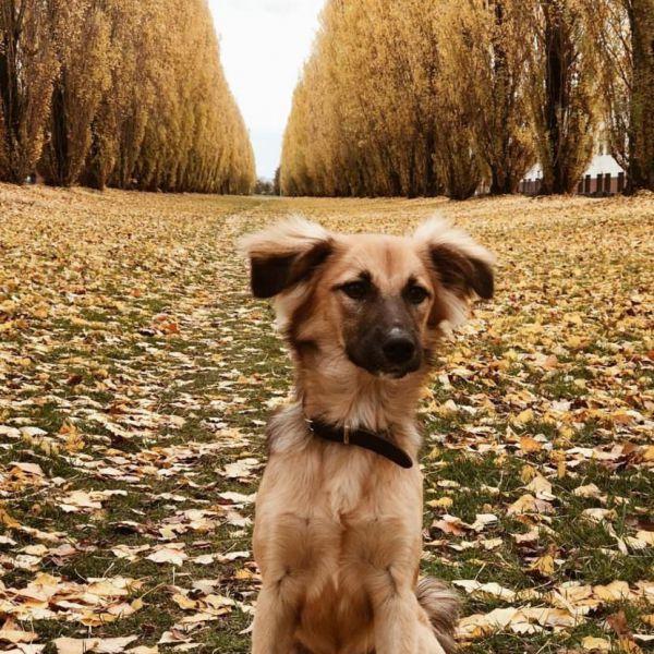 Frey (hond op werk)