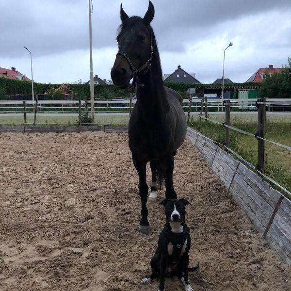 Vienna (paard) en Twix (hond)