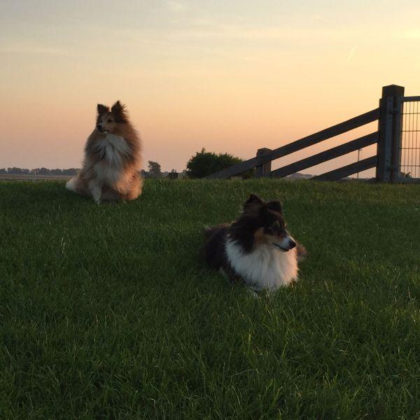 Amy en Daisy