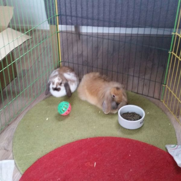 Lilly en Muffin