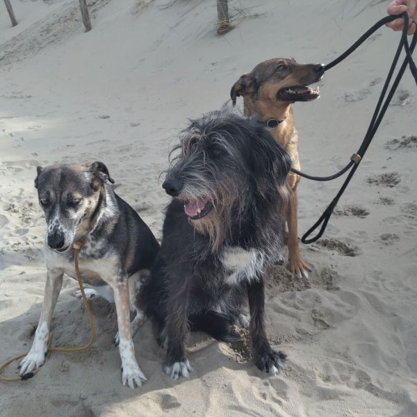 Indy & Faye & indra