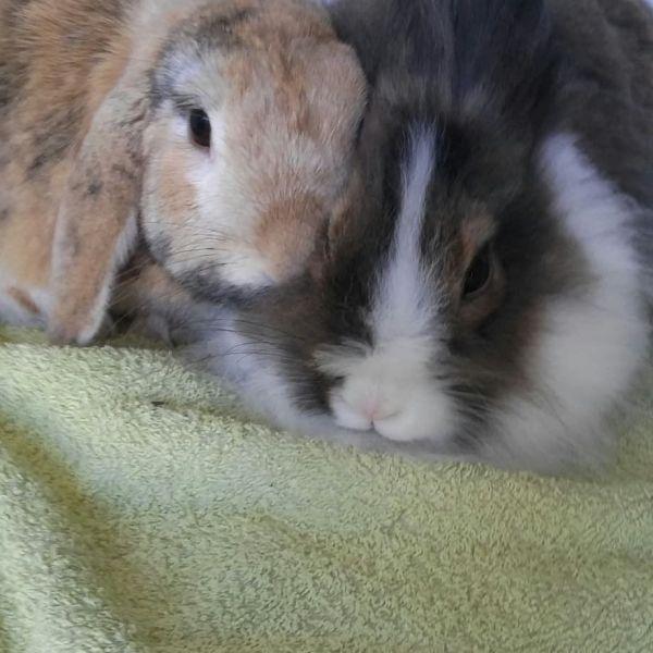 Olaf & Lily