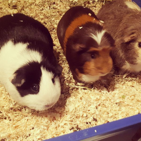 Lizz, Pippa & Puck