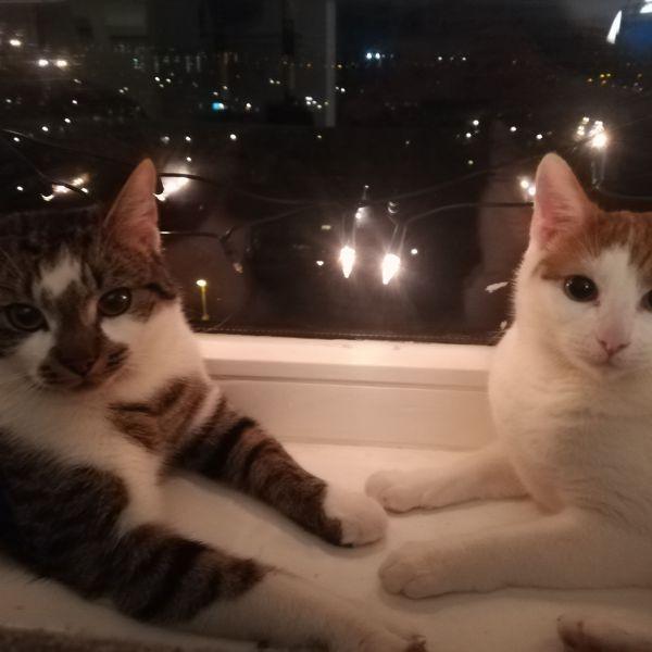 Freddie en Oscar