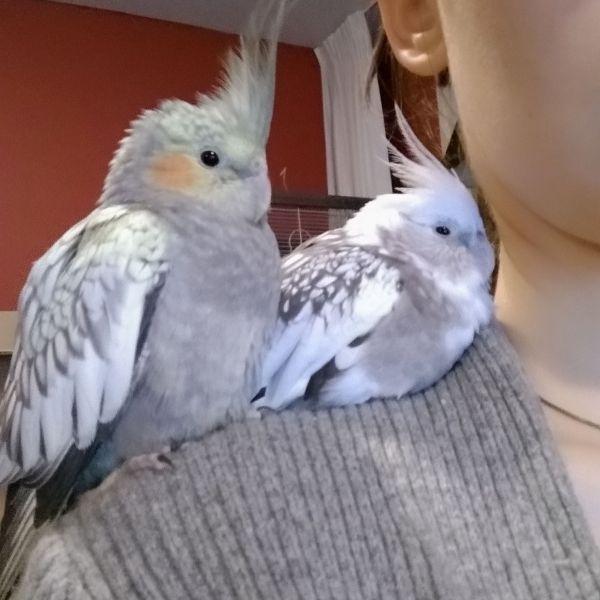Nero & Kyra